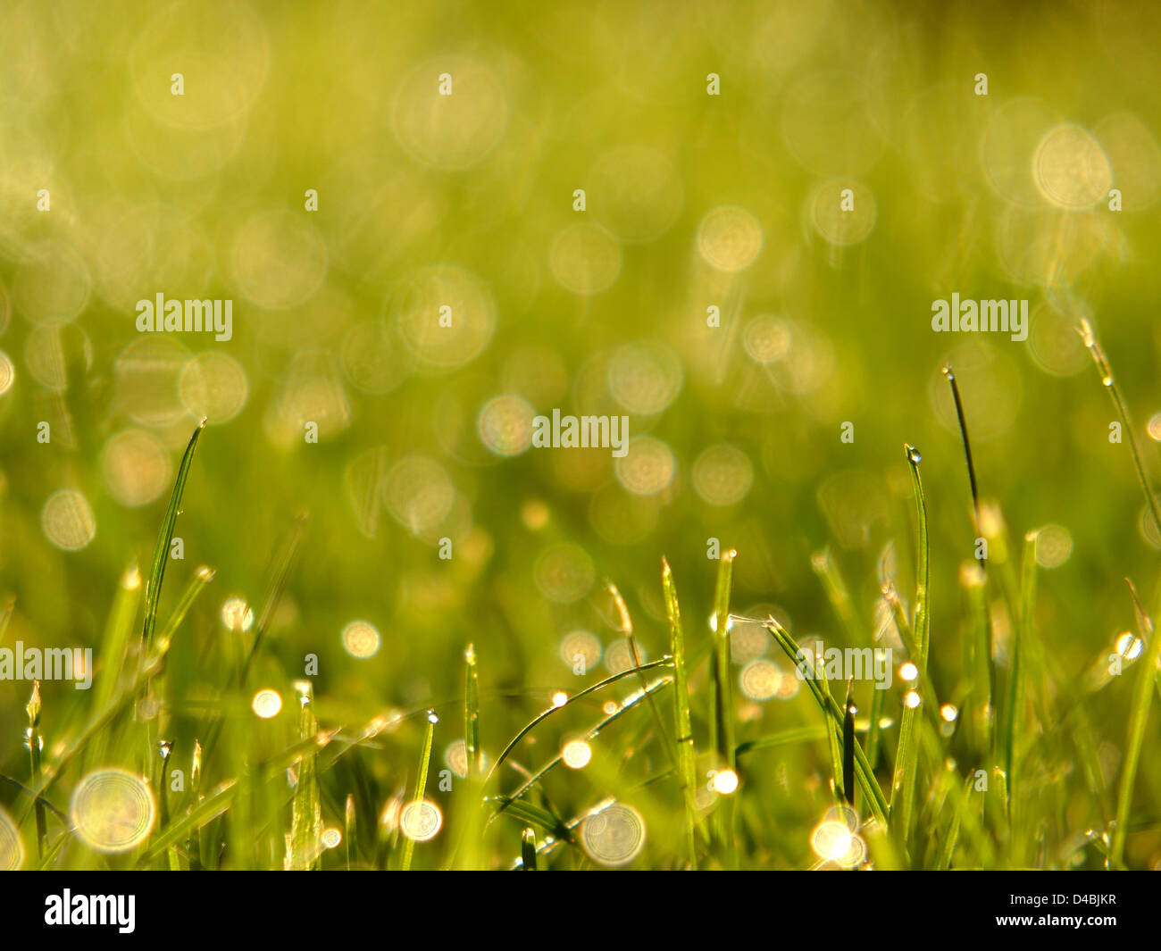 Grass with dew - Stock Image