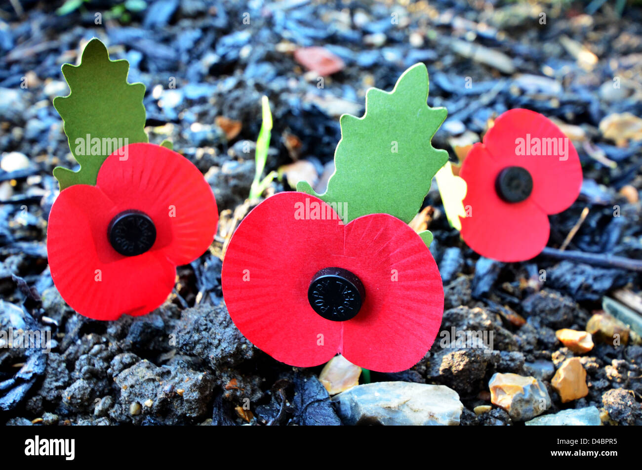 ARTIFICIAL REMEMBRANCE DAY POPPIES IN A GARDEN - Stock Image