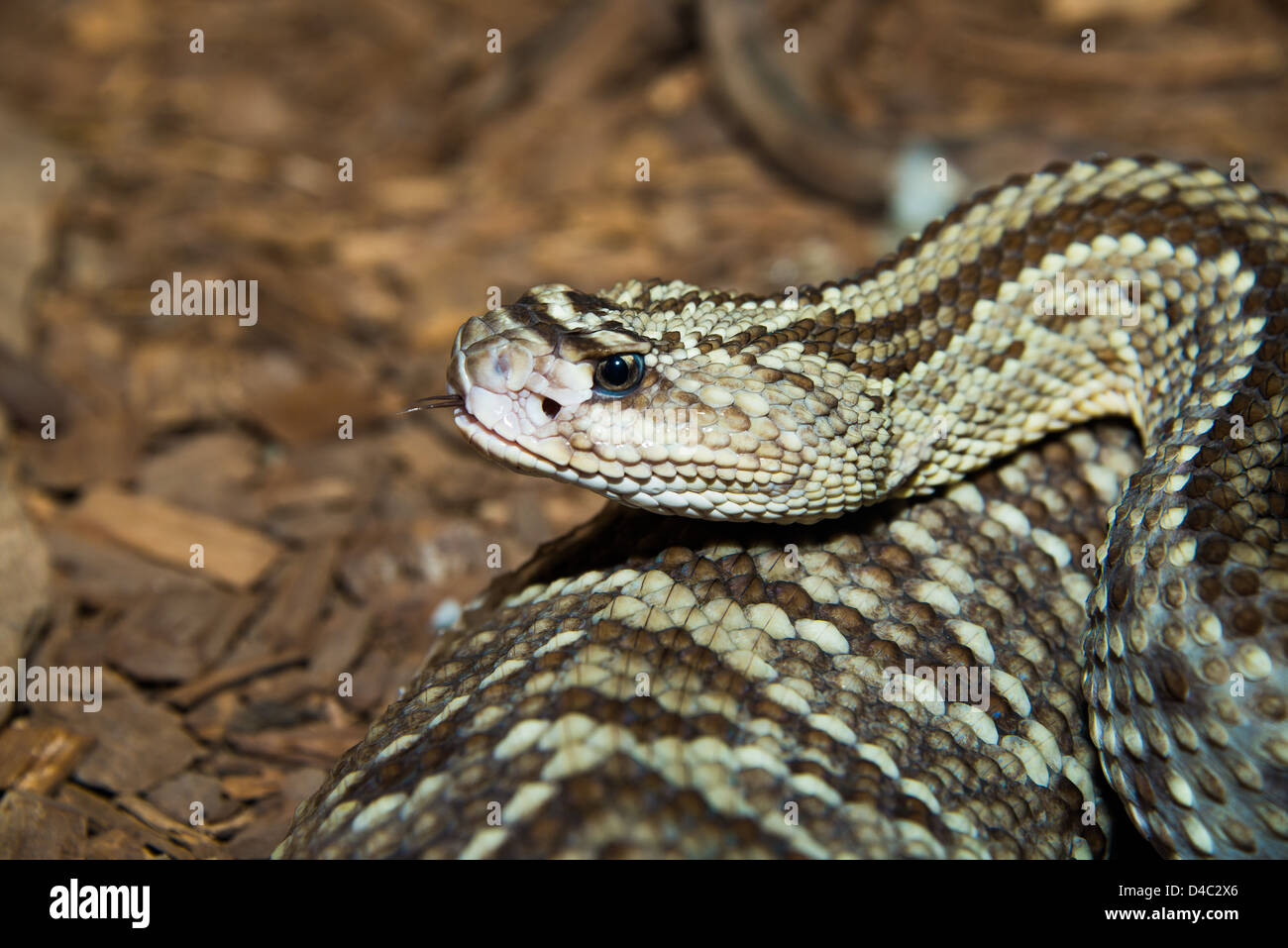 This is an image of a snake - Stock Image