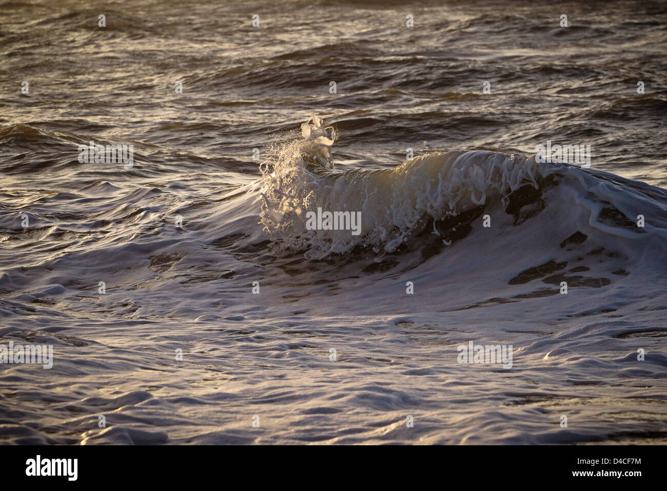 Waves in north sea in front of Sylt, Schleswig-Holstein, Germany, Europe - Stock Image
