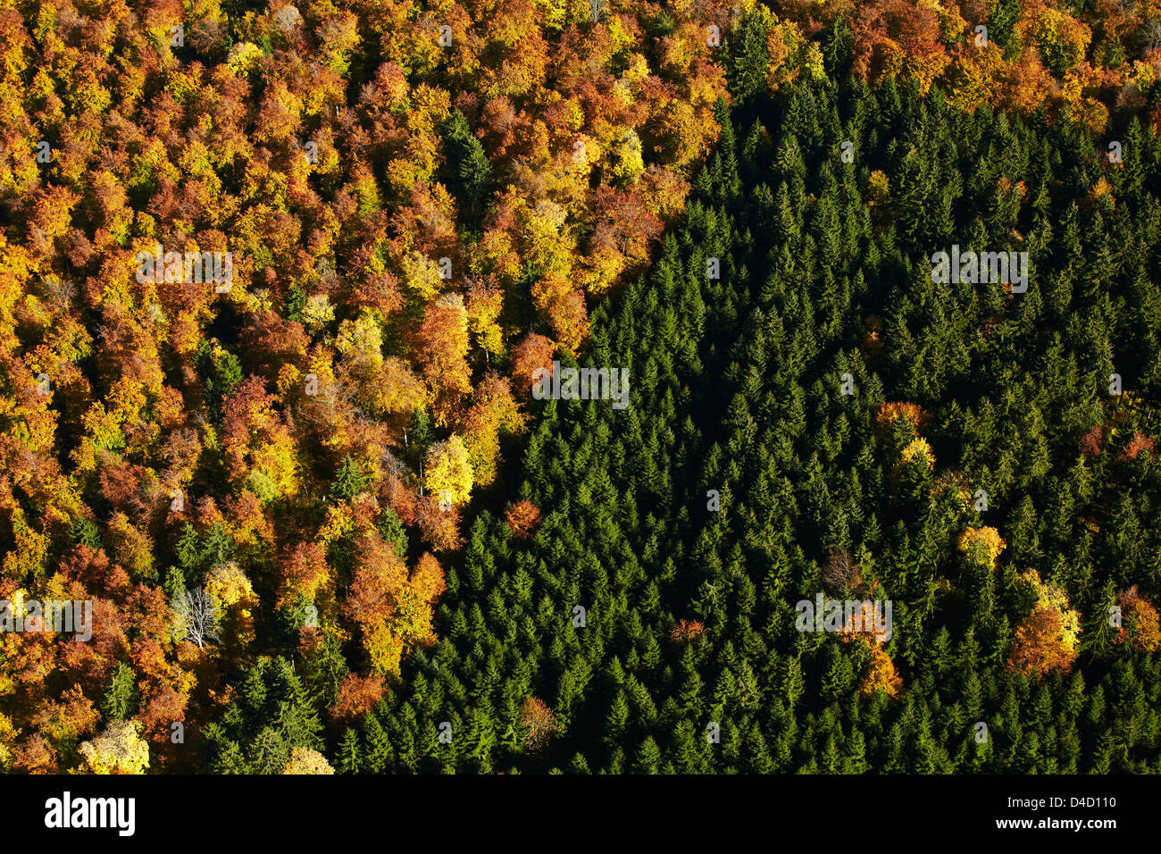 Autumnal broadleaf and conifer forest, aerial photo Stock Photo