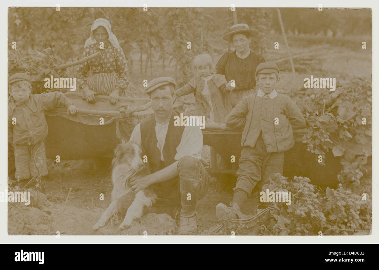 Edwardian postcard of hop pickers, Edwardians, U.K, circa 1905 - Stock Image