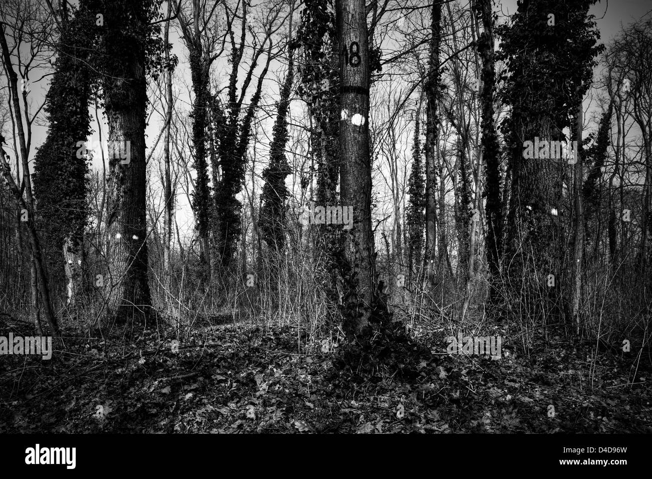 Numbered trees - Stock Image