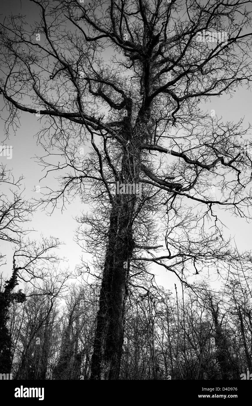 Hairy tree - Stock Image