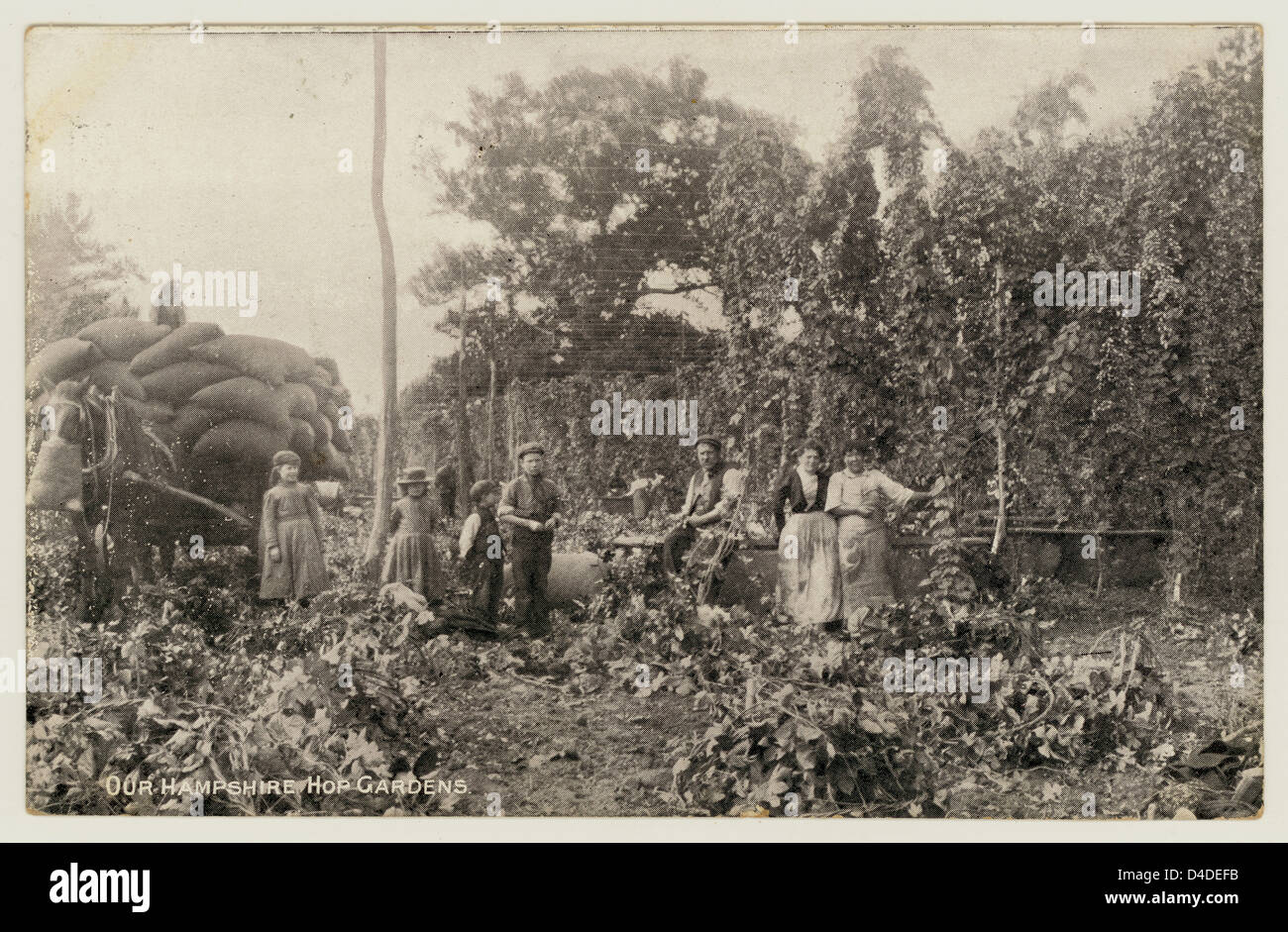 Hop pickers photo in Hampshire, posted in August 30 1911 - Stock Image