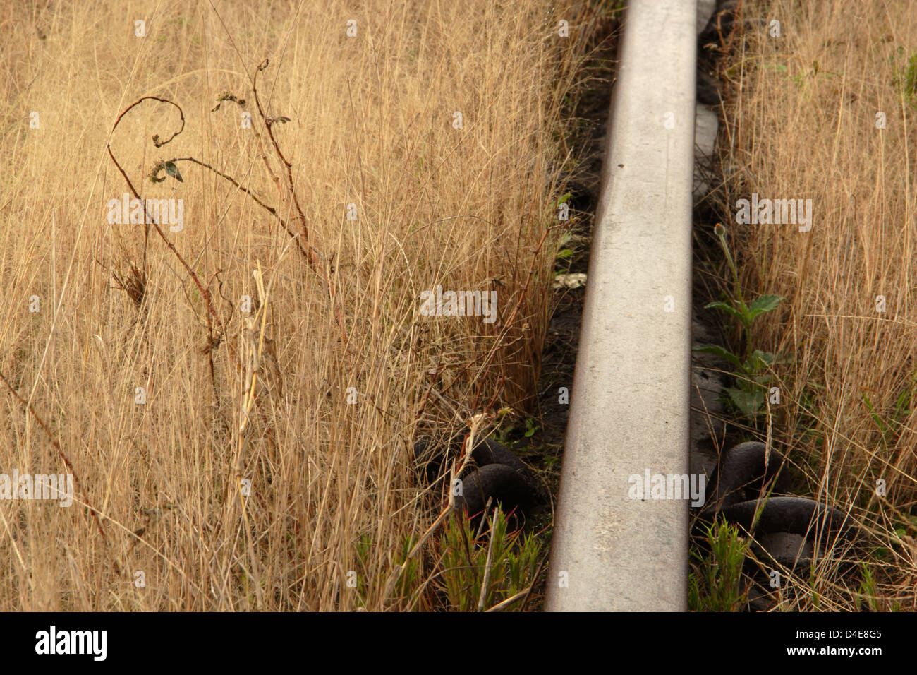 Macro closeup of a train rail track with long grass engulfing it. Good detail in the grass and the various rail - Stock Image