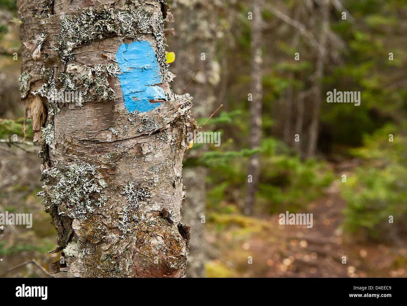 Hiking trail marker, Maine, USA - Stock Image