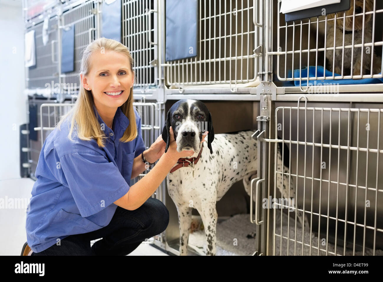 Vet placing dog in kennel - Stock Image