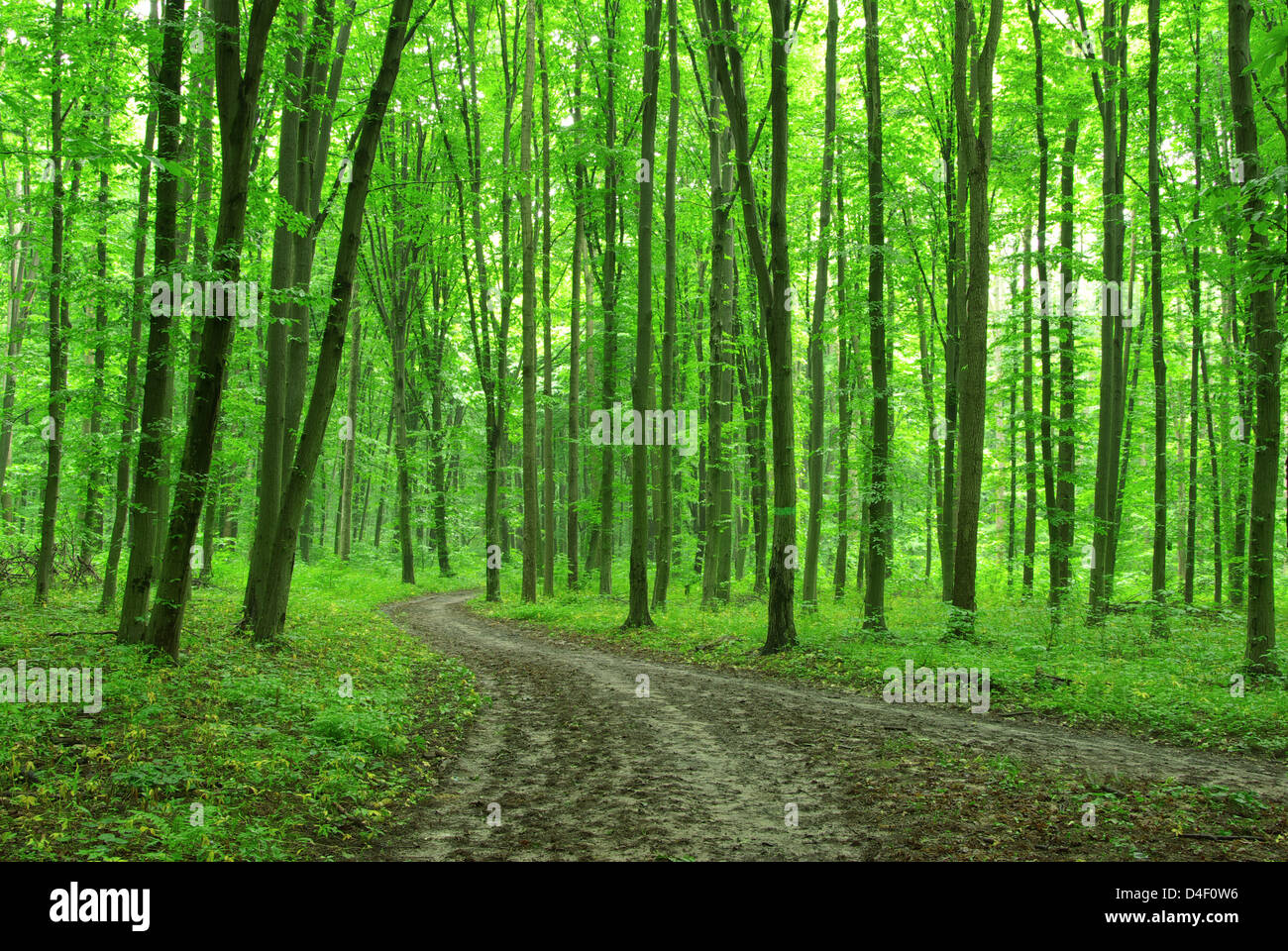 Forest Trees Nature Green Wood Backgrounds Stock Photo