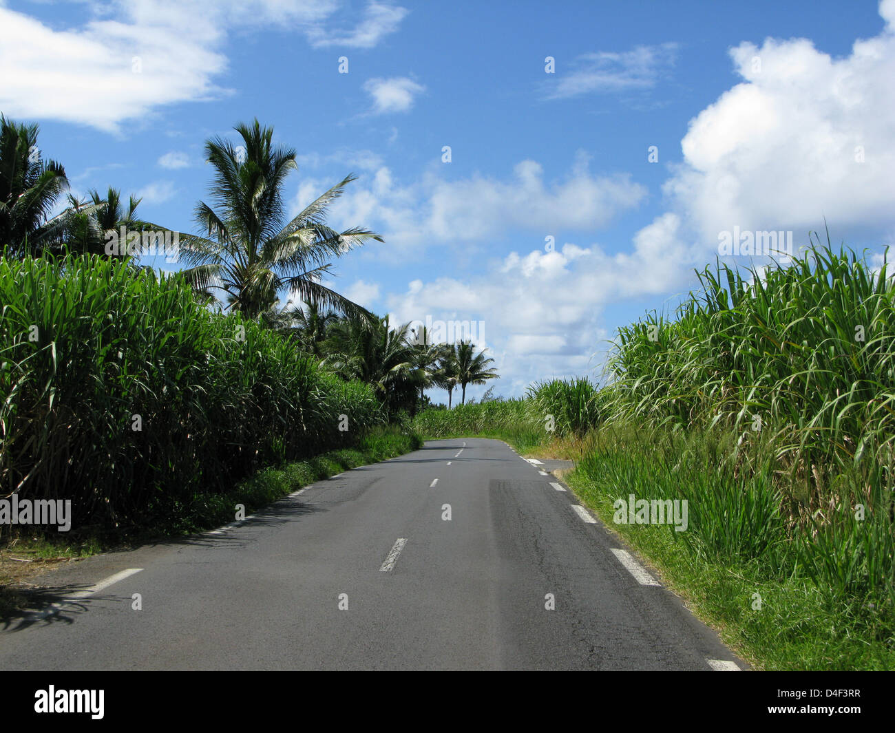 A typical rural road next to sugar cane plantations on La Reunion, France, 15 April 2008. Sugar cane is an important - Stock Image
