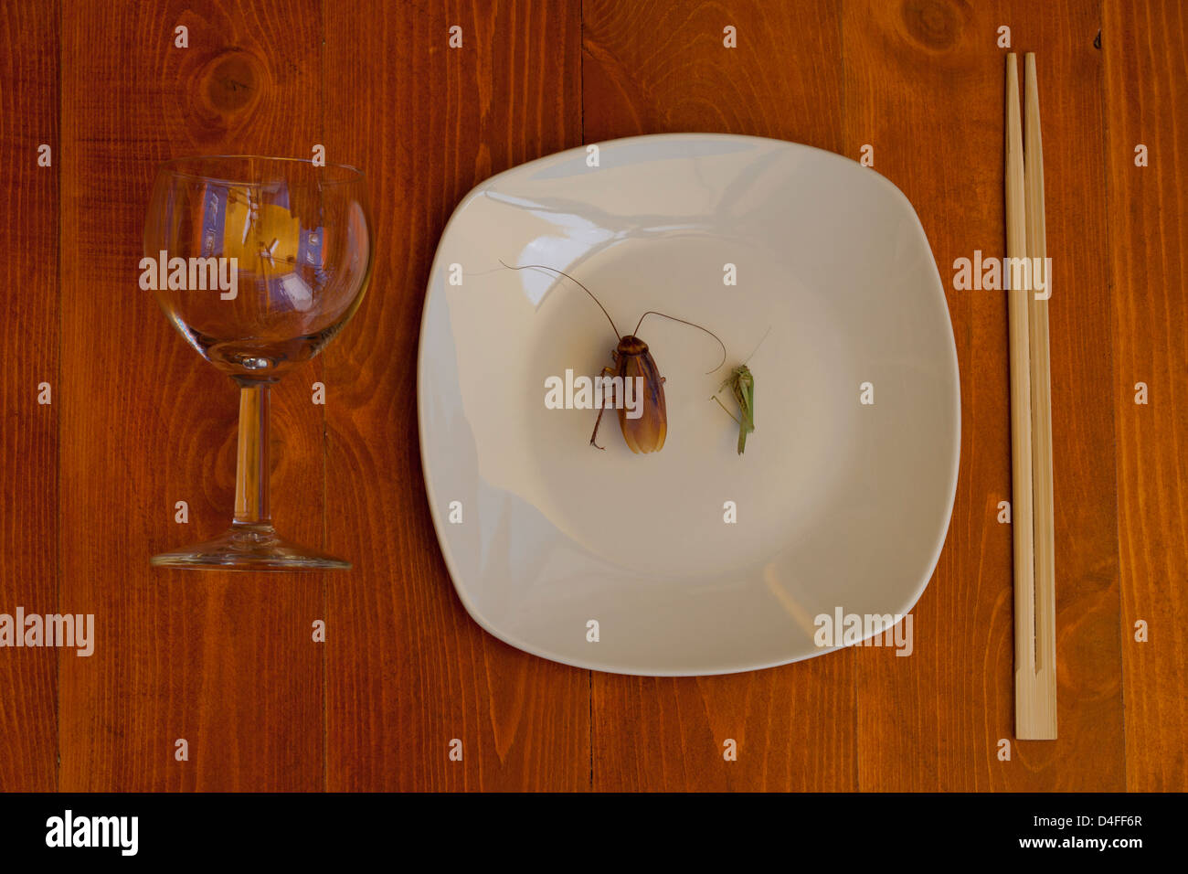cockroach and grasshopper on plate, sticks tablecloths and wine glass - Stock Image