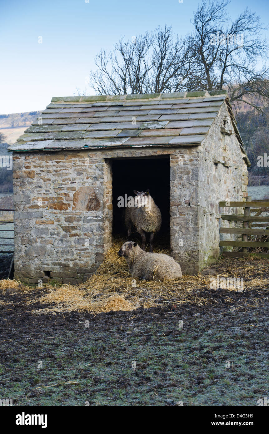Two Sheep In A Small Stone Barn