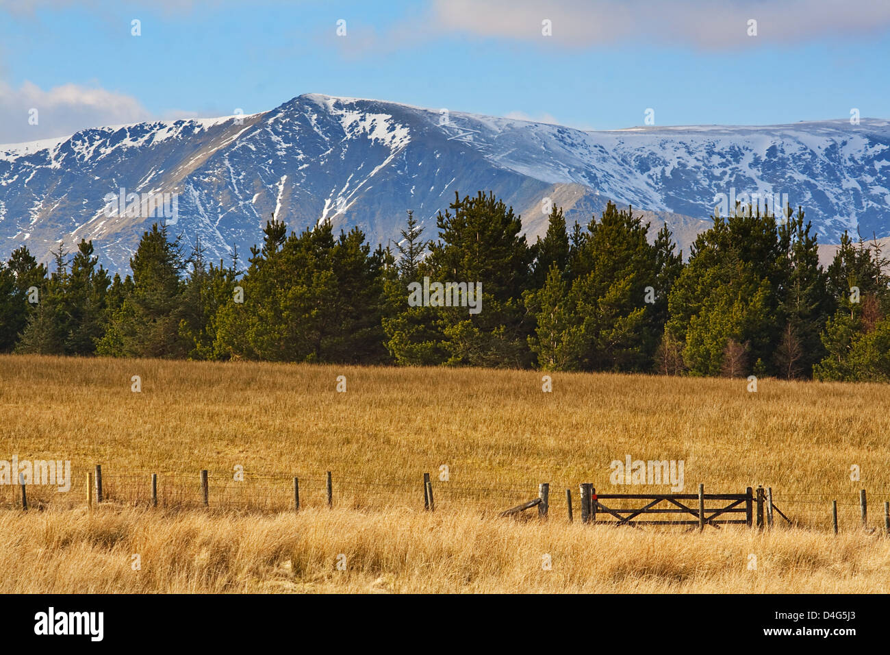 snow capped rocky mountains set behind fur trees with field or prairie in front - Stock Image