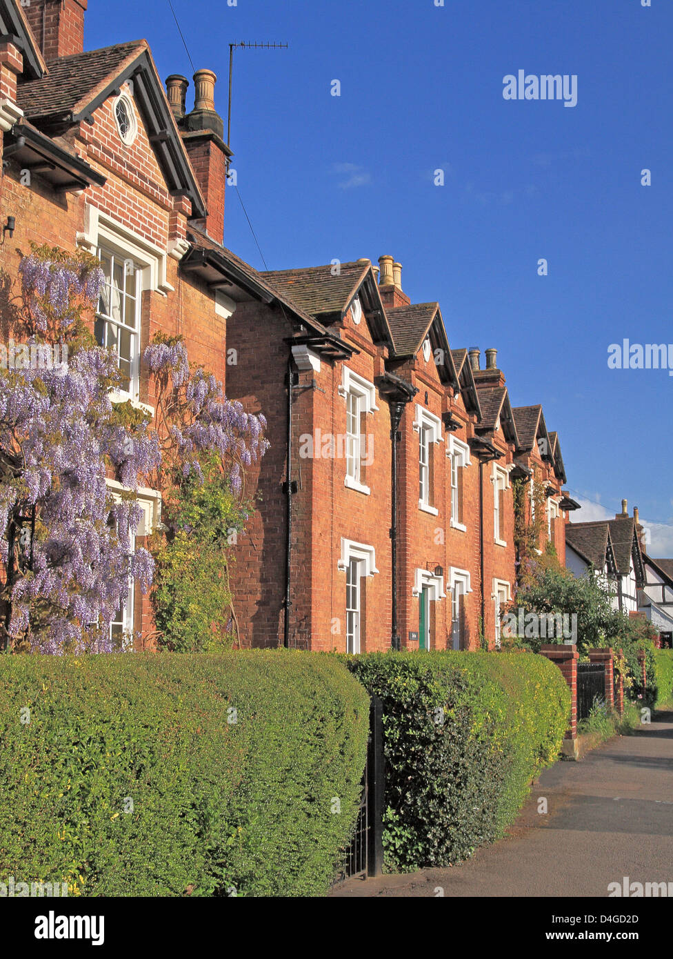 Row of Houses with Privet Hedge, Ombersley Village, Worcestershire, England, UK - Stock Image