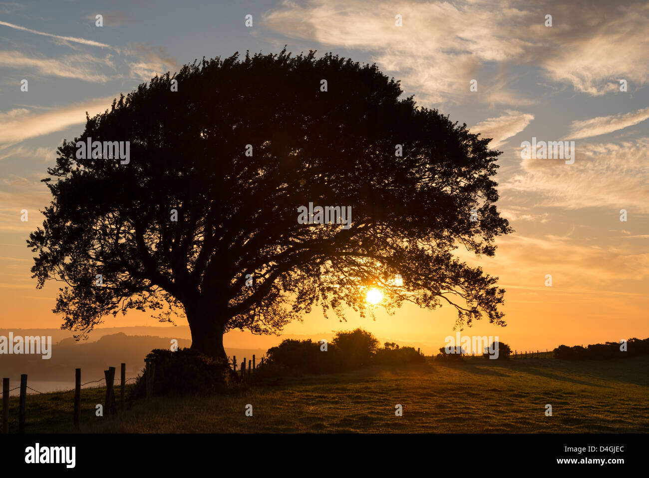 Colourful sunrise behind a tree in the countryside, Devon, England. Autumn (September) 2012. - Stock Image