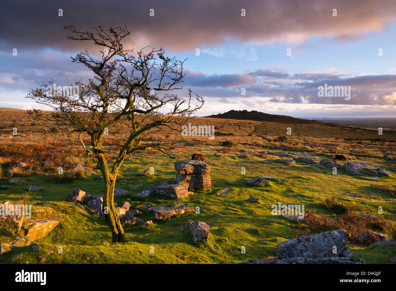 Looking to Pew Tor from Feather Tor, Dartmoor, Devon, England. Autumn (September) 2012. - Stock Image