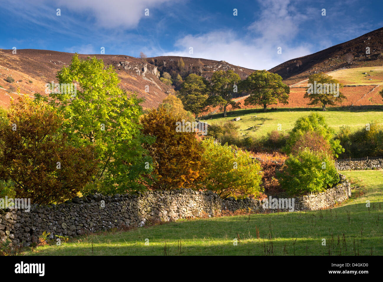Dry stone wall bordered by autumnal trees, Lake District, Cumbria, England. Autumn (October) 2012. - Stock Image