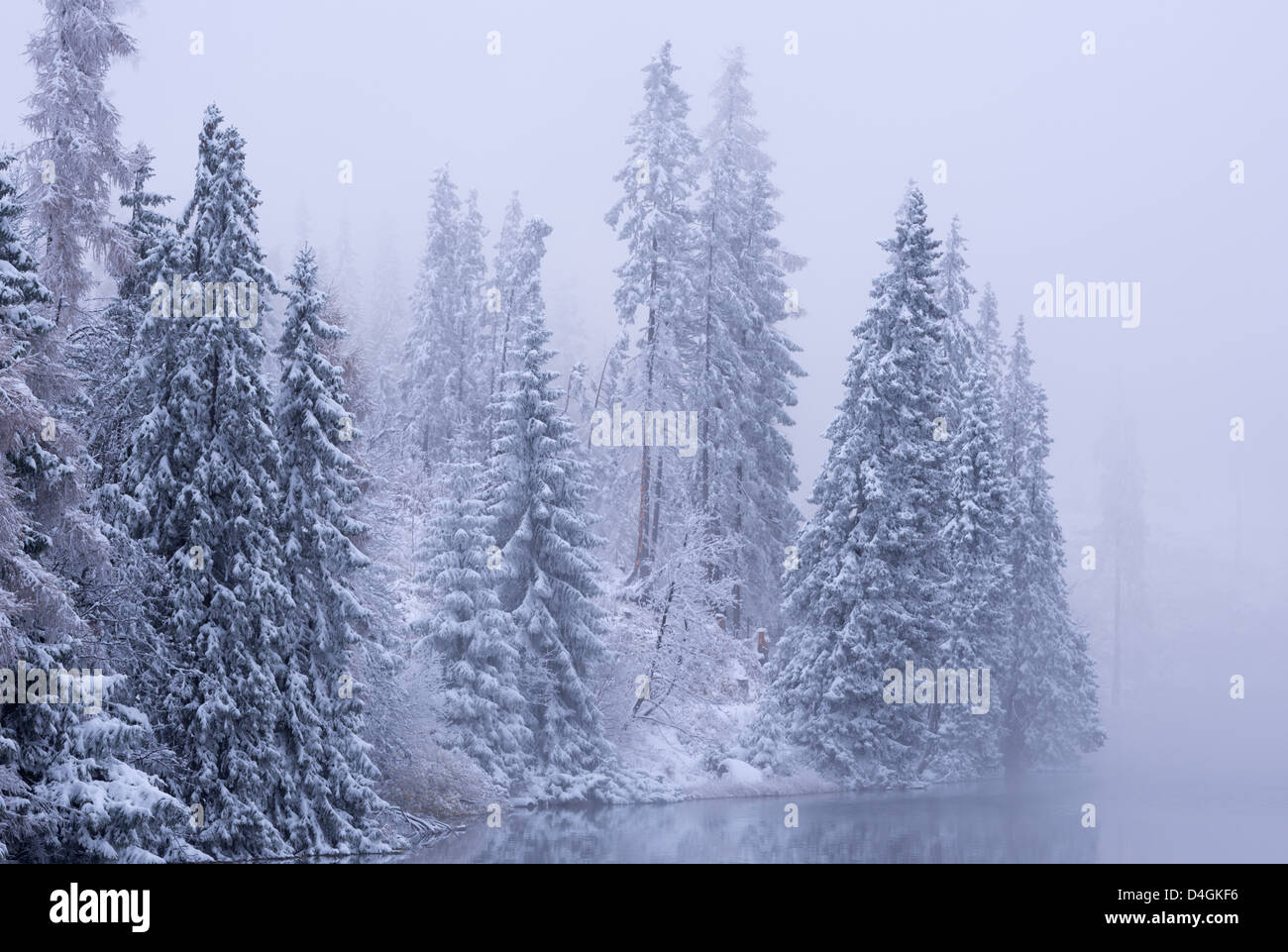 Snow covered pine trees in winter, High Tatras, Slovakia, Europe. - Stock Image