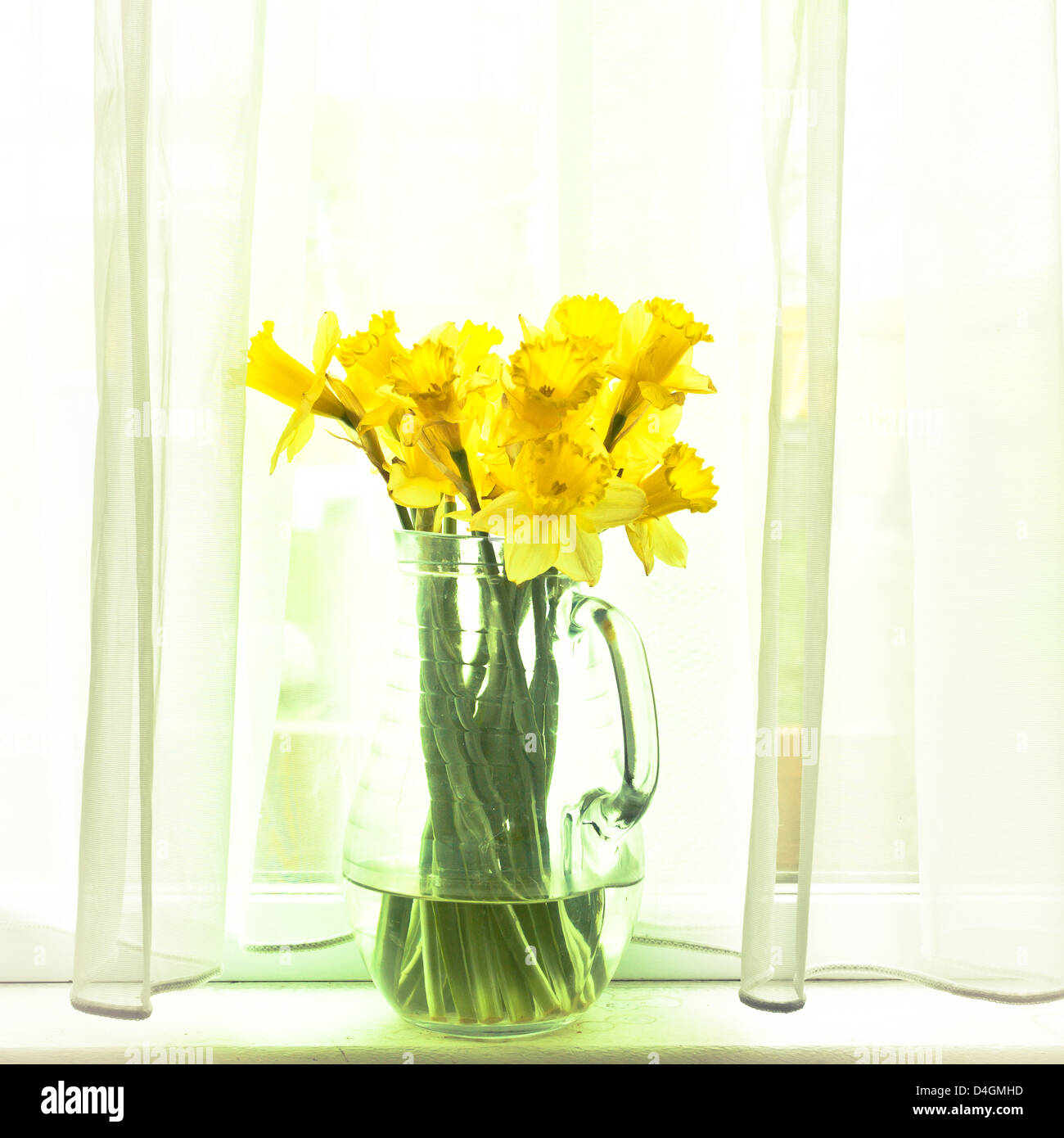 Fresh spirng daffodils in a glass jug in subtle vintage tones - Stock Image