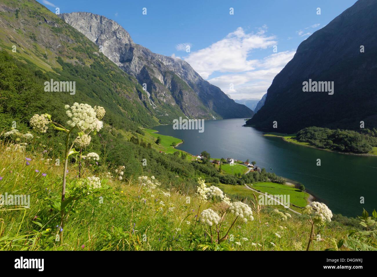 Wildflower meadow overlooking Naeroyfjorden, Sogn og Fjordane, UNESCO World Heritage Site, Norway, Scandinavia - Stock Image