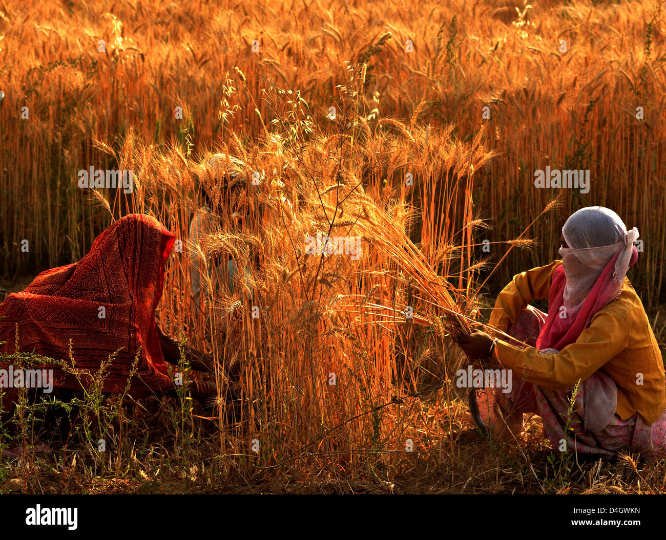 harvest hindu single women This articles discusses position of hindu women in the hindu society during ancient and modern times as well as what hindu scriptures say about women.