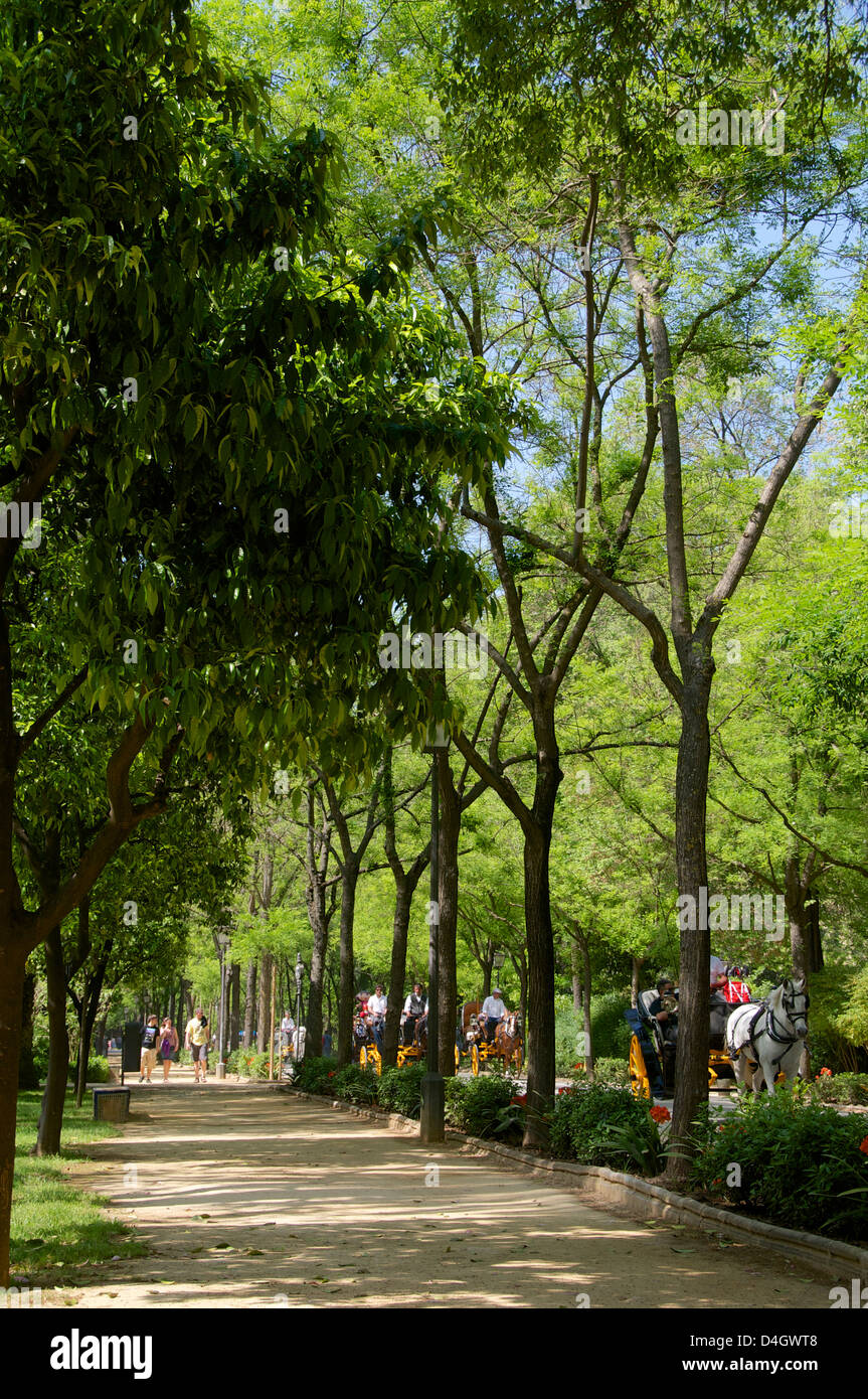 Tourists walking across Maria Luisa Park, and horse drawn carriages, Seville, Andalusia, Spain - Stock Image