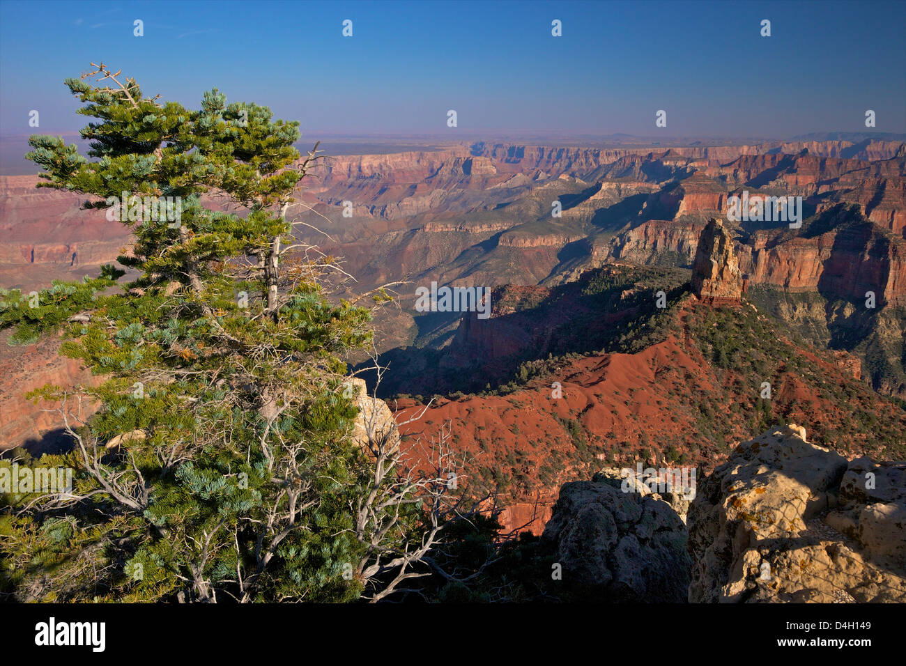 Southeast view, North Rim, Grand Canyon National Park, UNESCO World Heritage Site, Arizona, USA - Stock Image