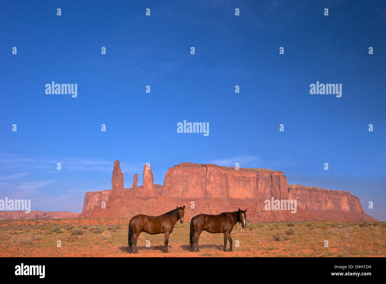 Two Navajo horses, Monument Valley Navajo Tribal Park, Utah, USA - Stock Image