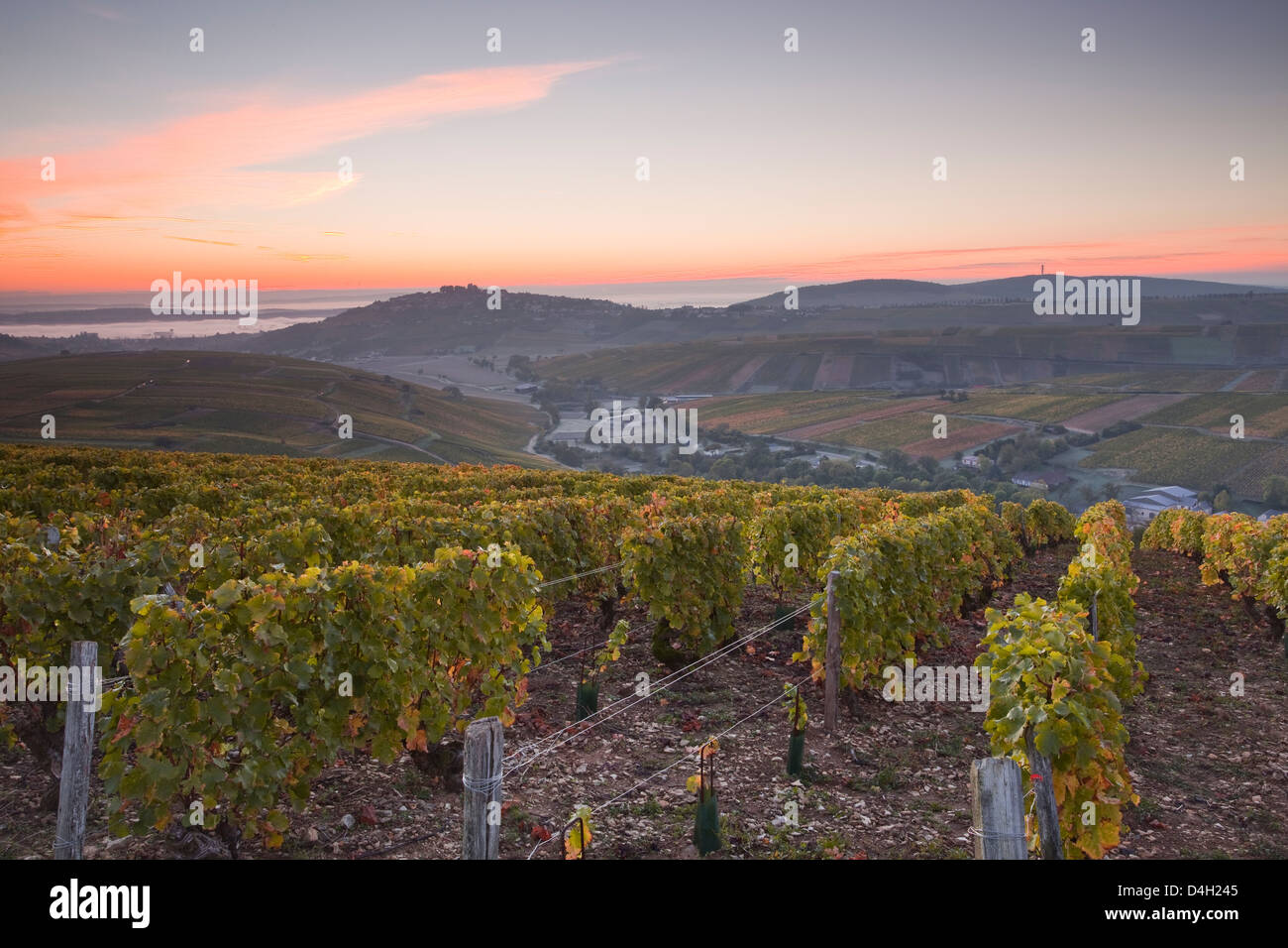 The vineyards of Sancerre draped in autumn colours, Cher, Centre, France - Stock Image