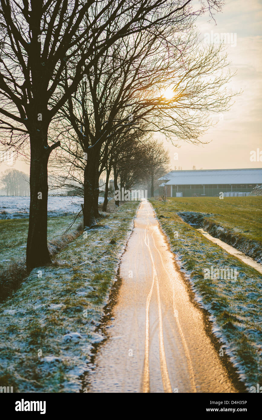 The Oude Trambaan (old tramway) tree lined cycle path in winter, Rijsbergen, North Brabant, The Netherlands (Holland) - Stock Image