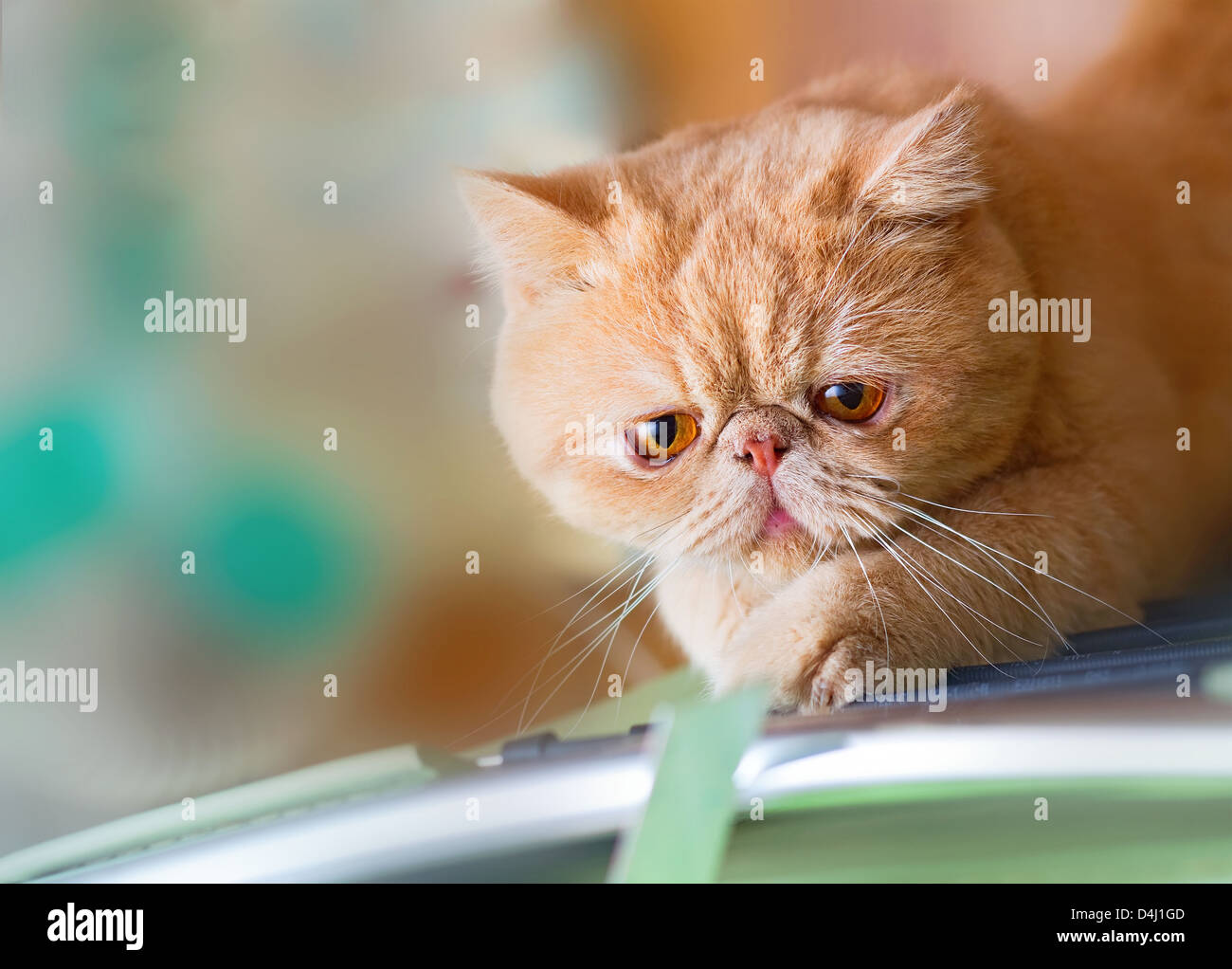 Garfield Cat High Resolution Stock Photography And Images Alamy
