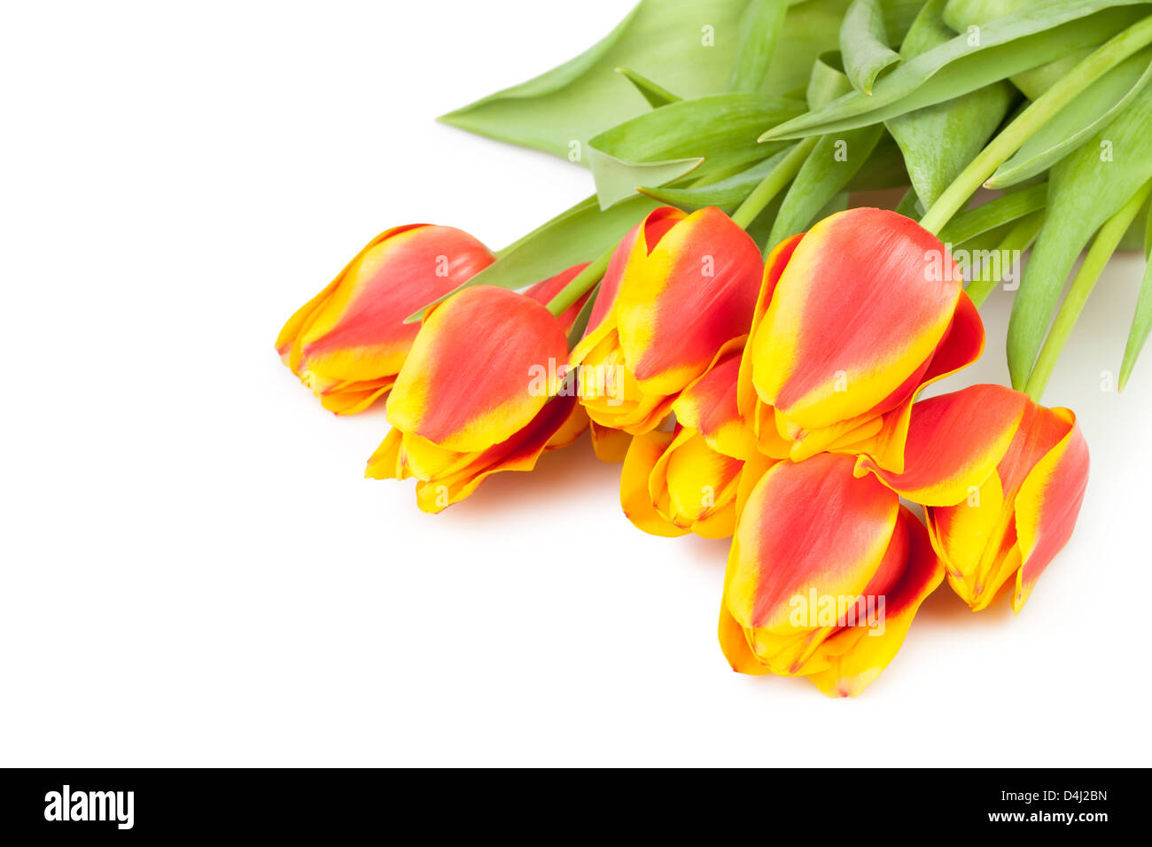 tulips bouquet lay on white background - Stock Image