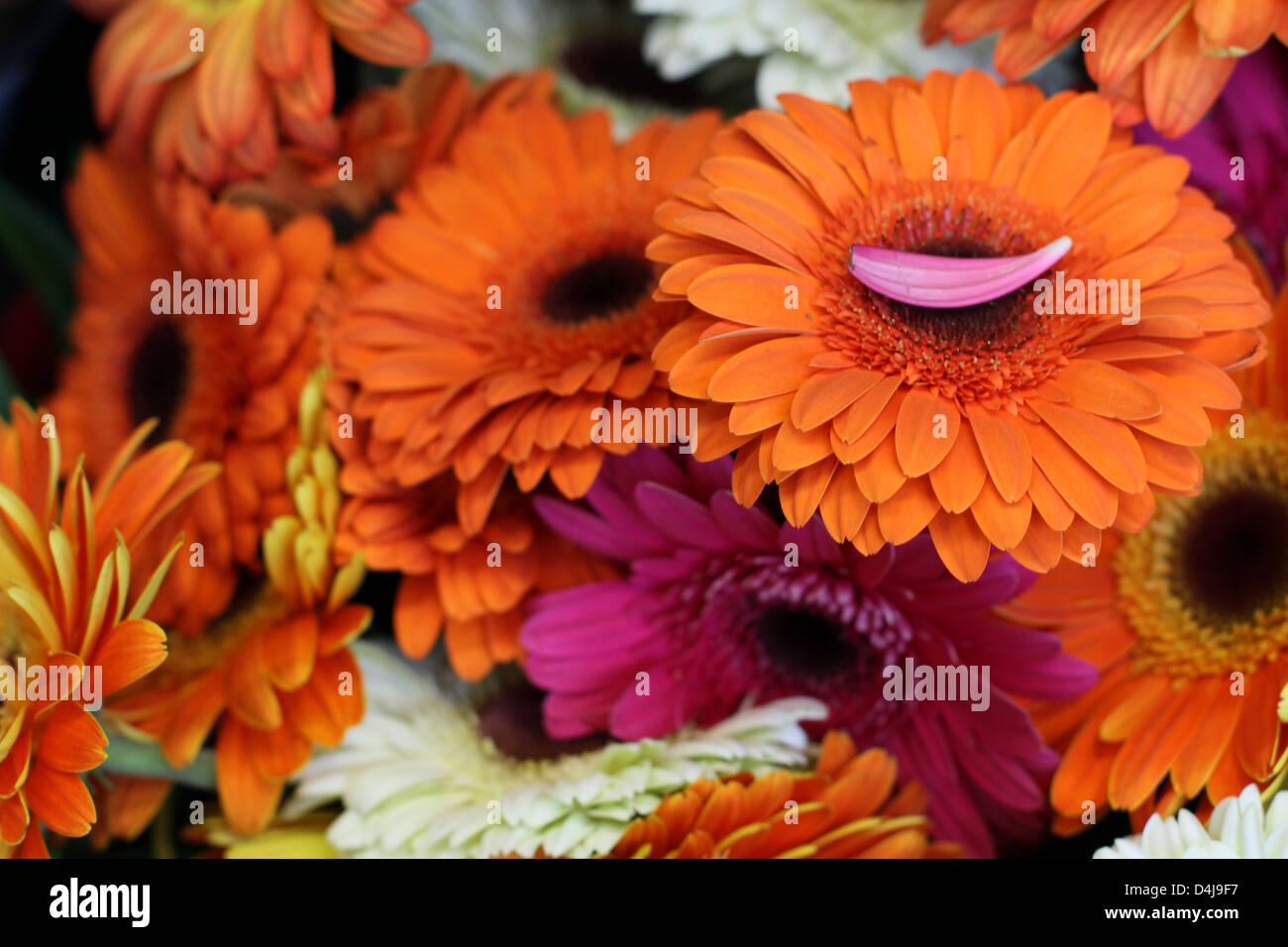 Fall Flowers Bouquet Stock Photos Fall Flowers Bouquet Stock