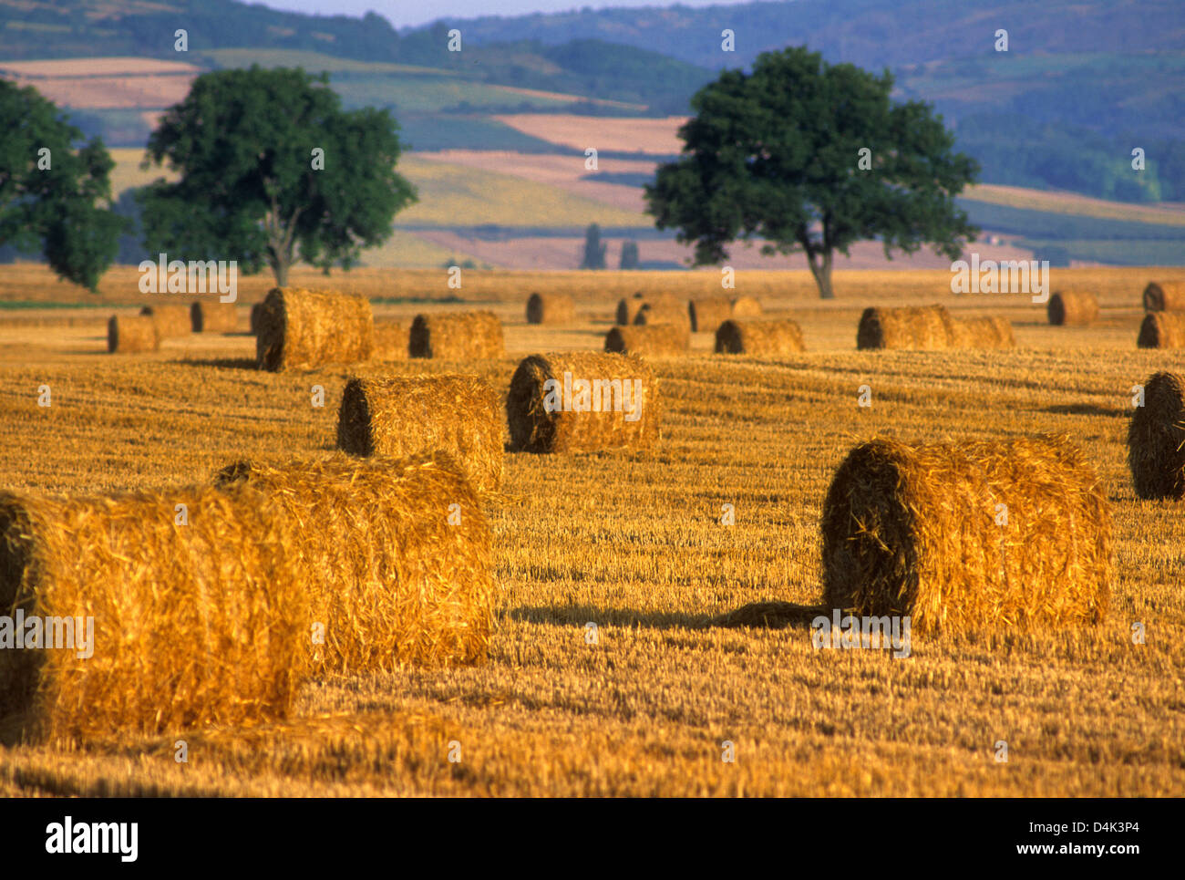 Hay bales in Auvergne, France - Stock Image