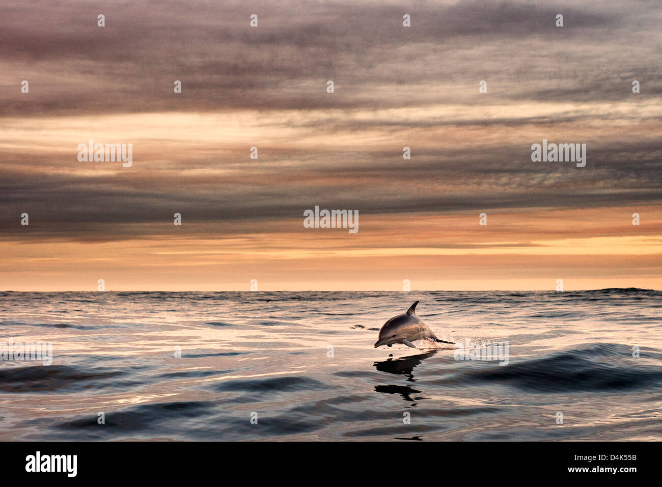 Dolphin jumping over water - Stock Image