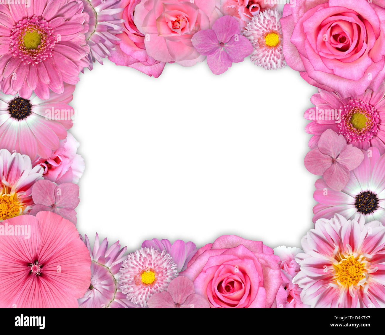 Flower frame pink yellow background white set dahlia chrysanthemum flower frame pink yellow background white set dahlia chrysanthemum daisy cornflower petunia carnation isolated collection osteos mightylinksfo
