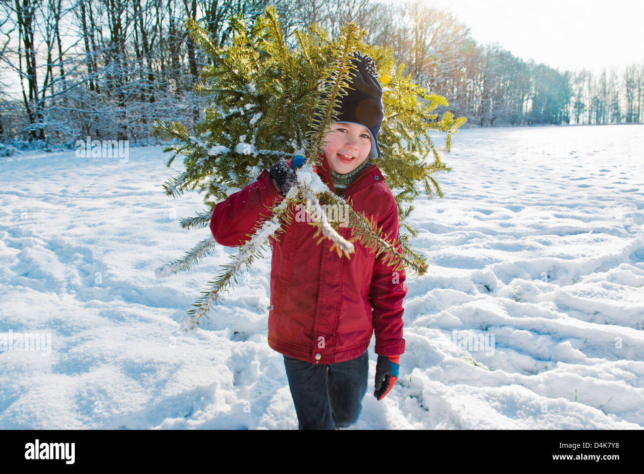 Boy carrying Christmas tree in snow - Stock Image