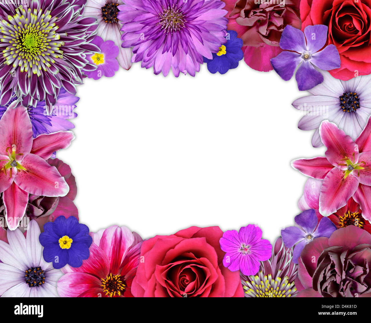 Flower frame collection pink purple blue red white set dahlia stock flower frame collection pink purple blue red white set dahlia chrysanthemum daisy cornflower periwinkle carnation isolated on wh mightylinksfo