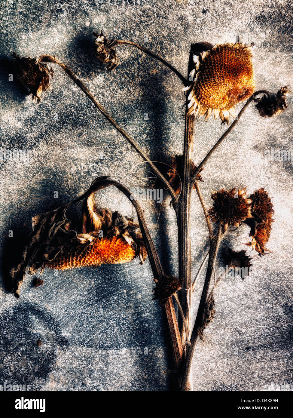 Close up of dried flowers on table - Stock Image