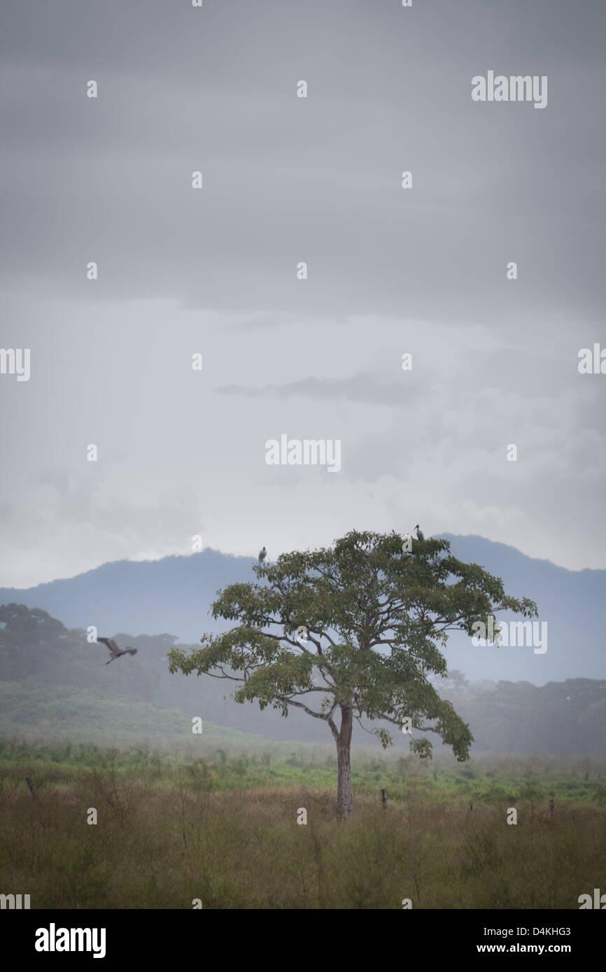 Hazy pasture landscape near Tonosi, Los Santos province, Republic of Panama. - Stock Image