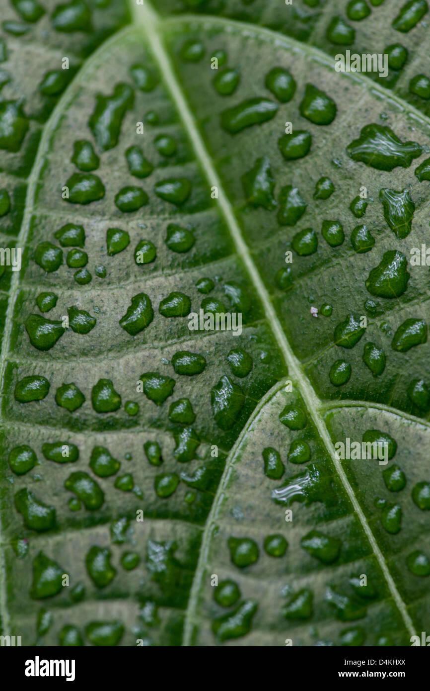 Leaf structures in La Amistad national park, Chiriqui province, Republic of Panama. - Stock Image