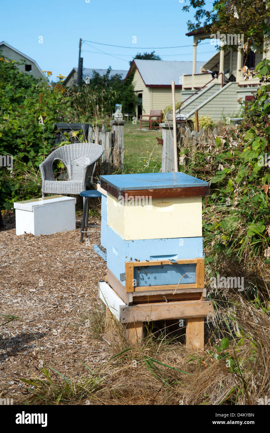 Bee hives in backyard for urban beekeeping operation - Stock Image