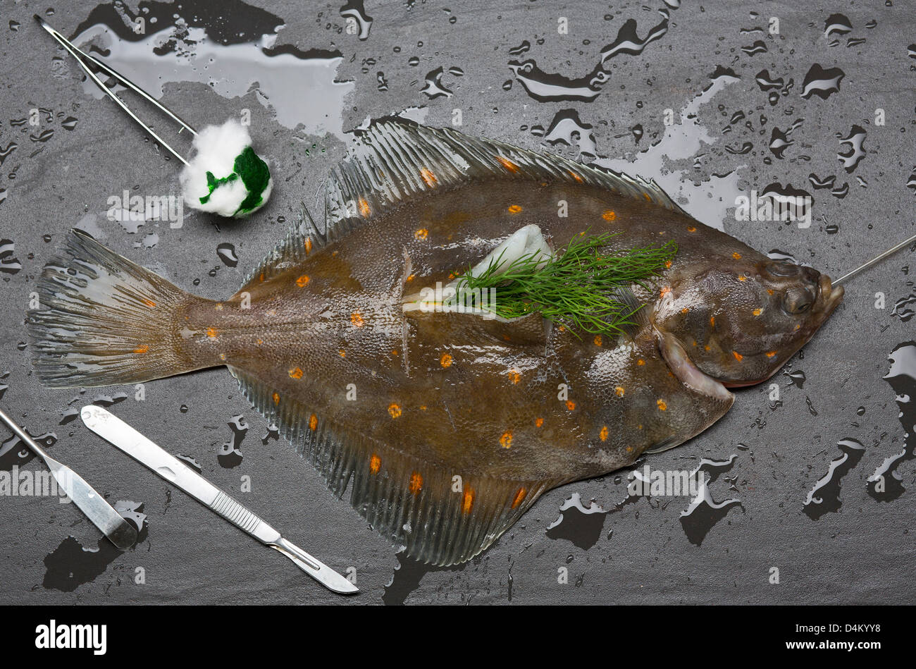 Fresh fish surgically stuffed with herbs - Stock Image