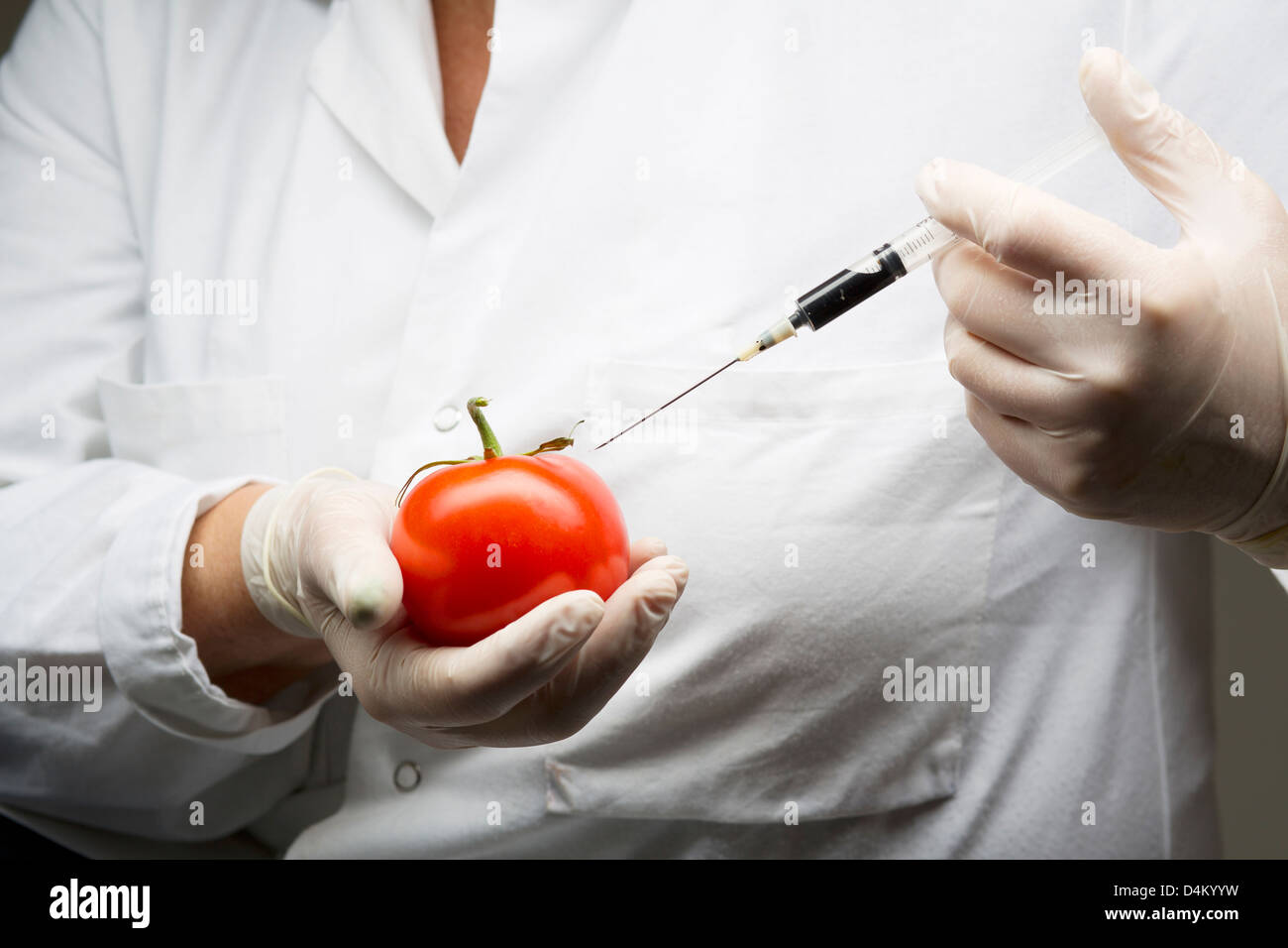 Scientist injecting tomato with syringe - Stock Image