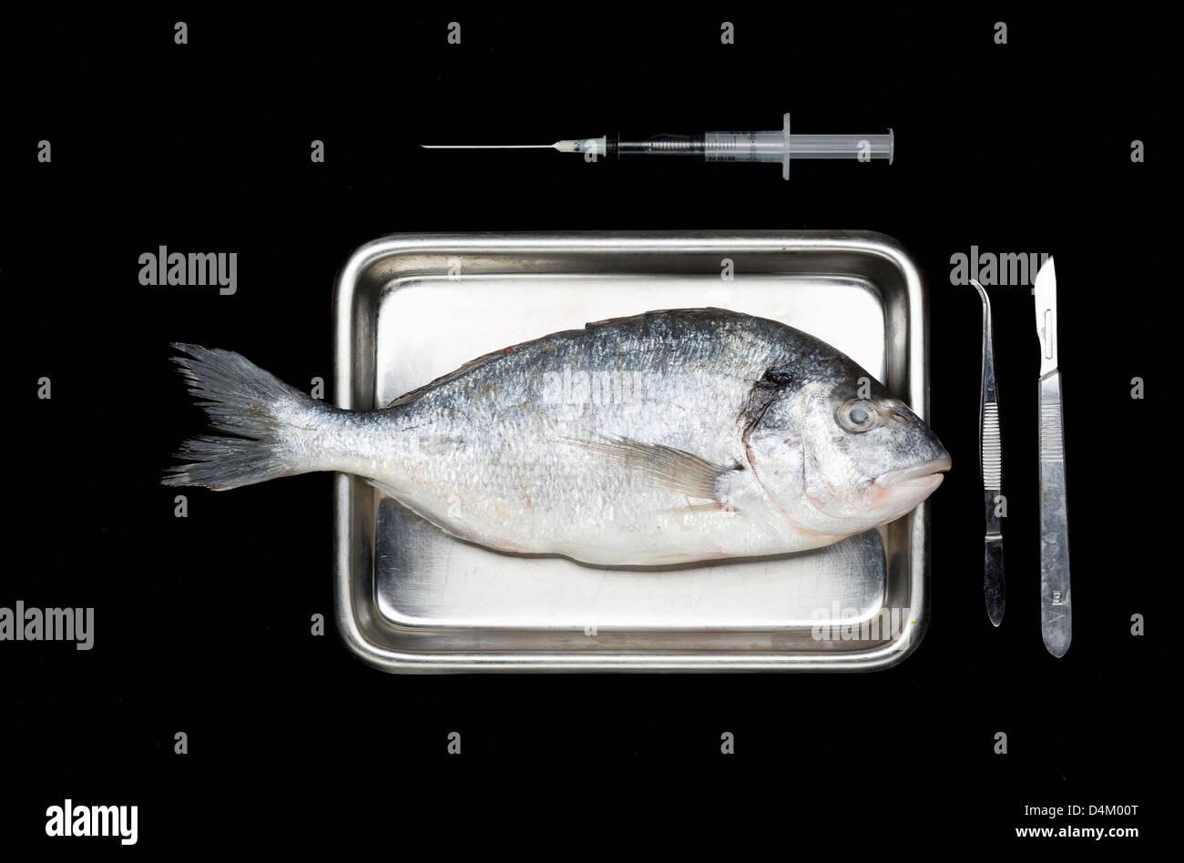 Fresh fish on surgery tray - Stock Image