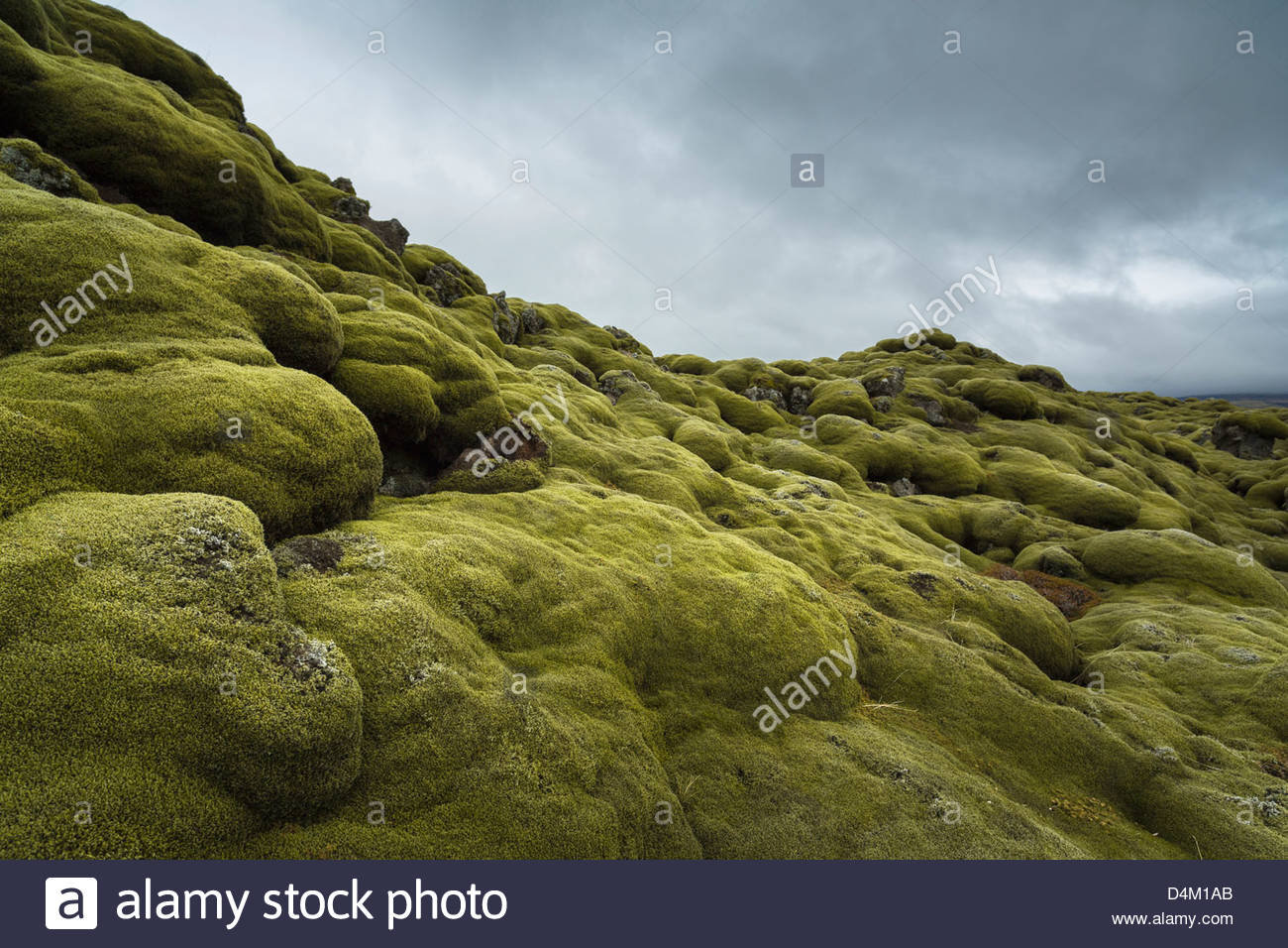 Moss growing on rocky hill - Stock Image