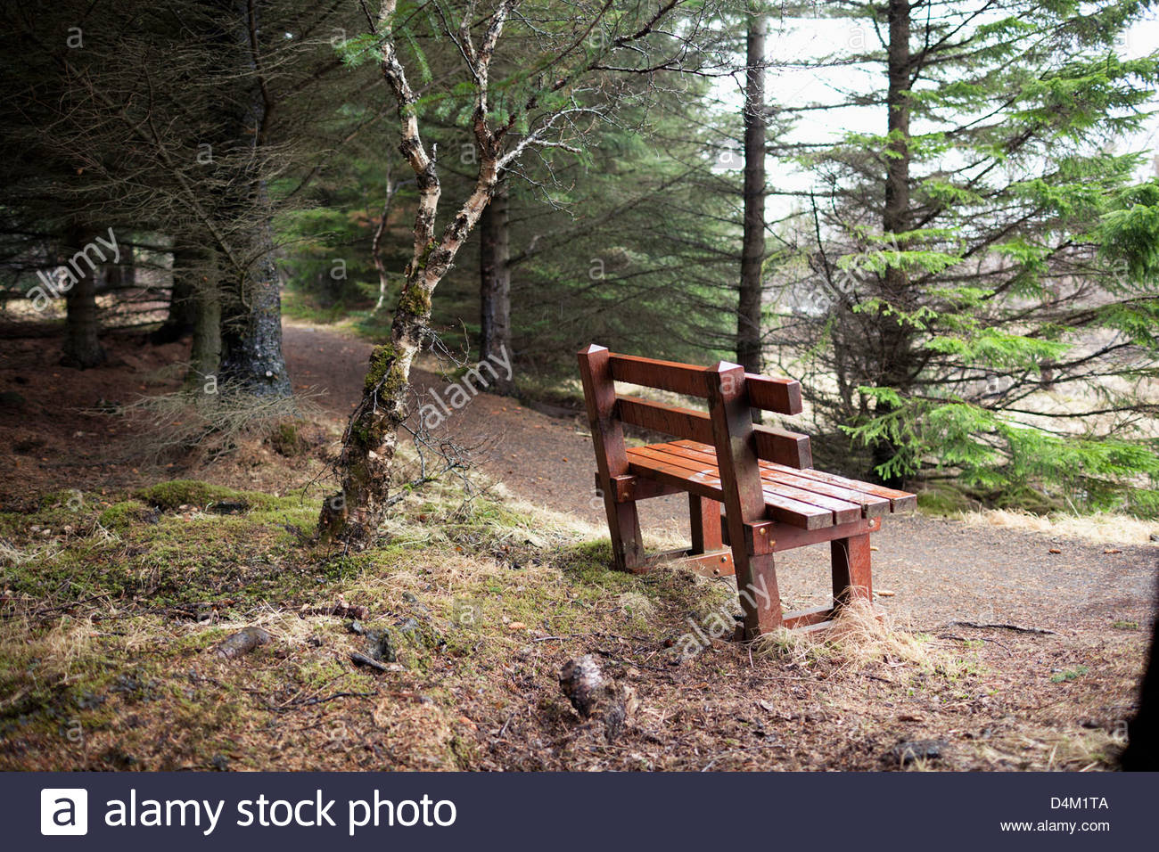 Bench on dirt road in forest - Stock Image