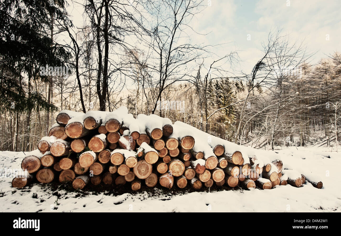 logs in snow - Stock Image