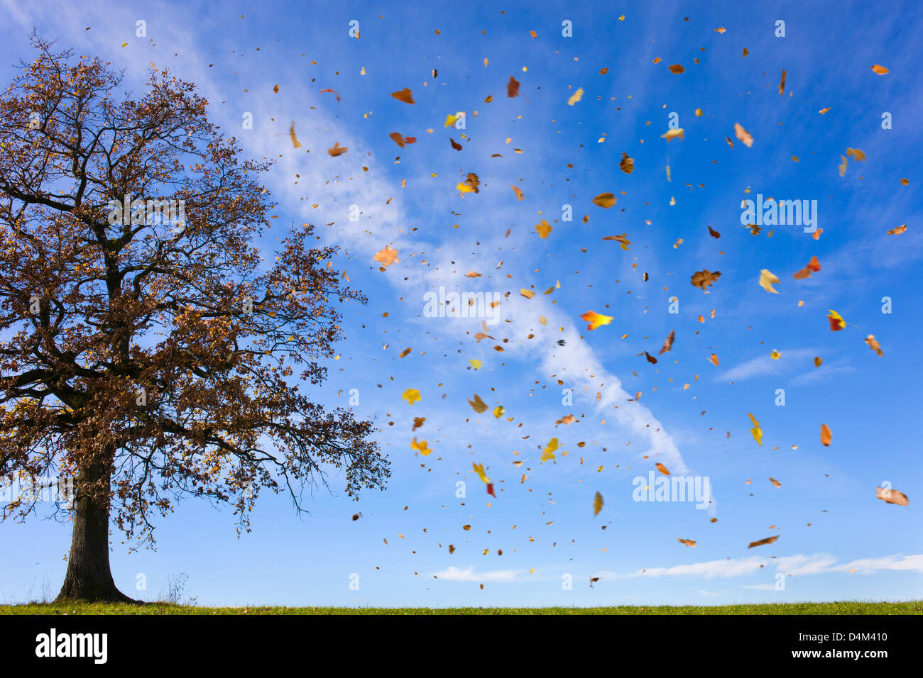 Autumn leaves flying in rural field Stock Photo