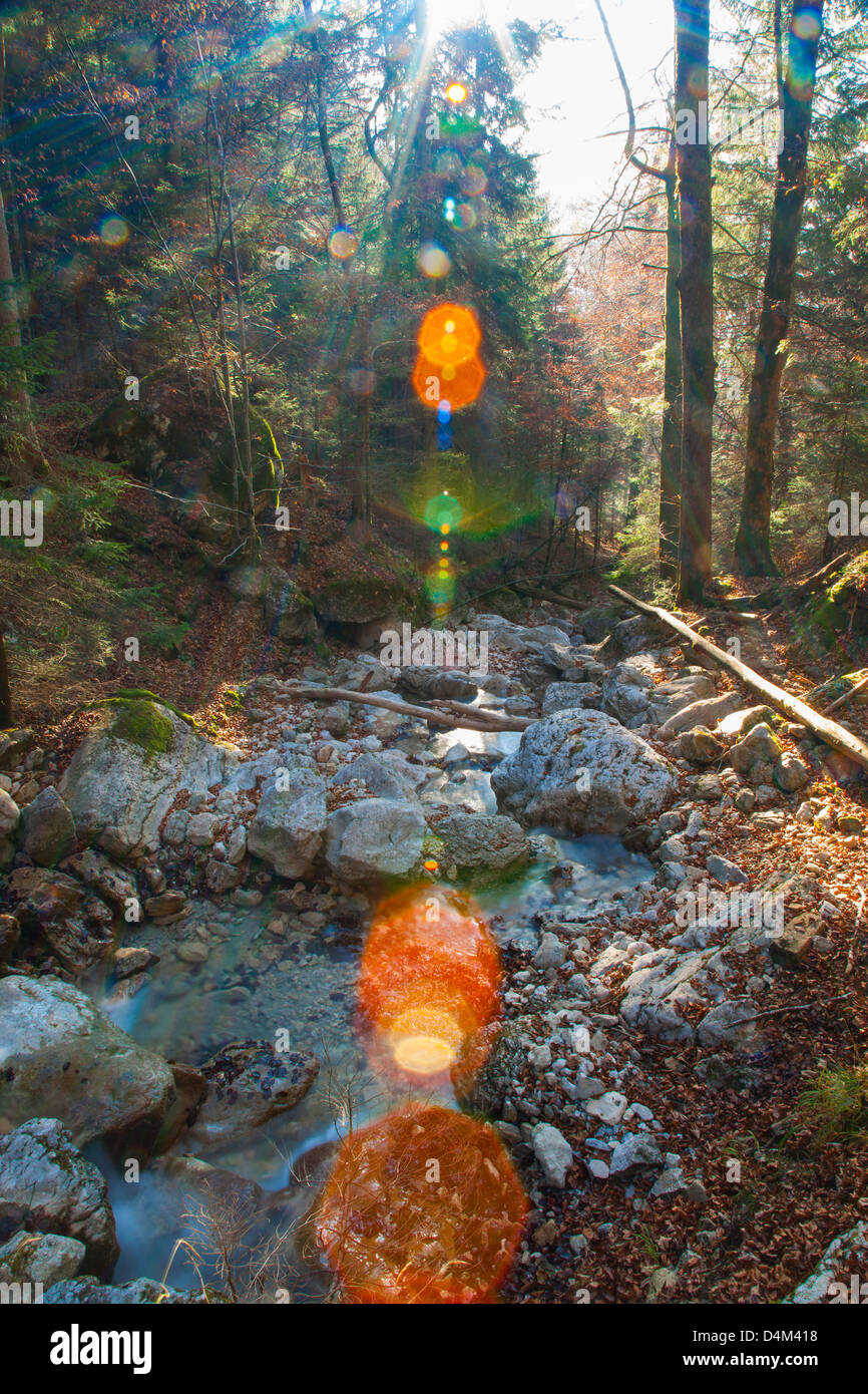 Sun shining over rocky creek in forest - Stock Image